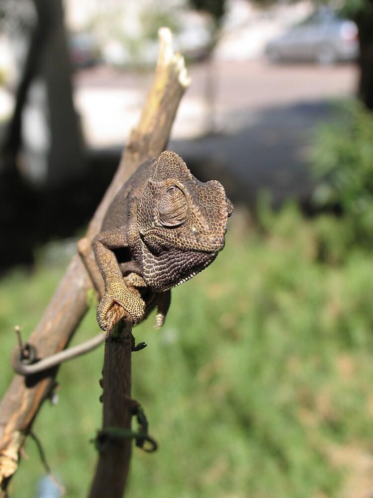 Chameleon 6 by IrinaBudovsky