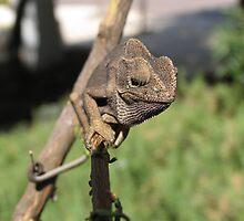 Chameleon 8 by IrinaBudovsky