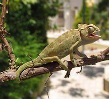 Chameleon 9 by IrinaBudovsky