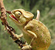 Chameleon 12 by IrinaBudovsky