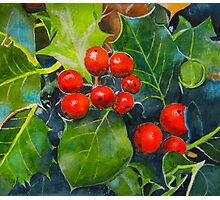 Holly Berries Photographic Print