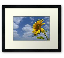 Sunflower - A Tribute to the Lockyer Valley Framed Print