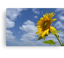 Sunflower - A Tribute to the Lockyer Valley Canvas Print