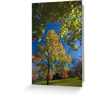 Maple Tree Framed Greeting Card