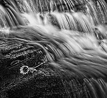 East Gill Force 03 - Nr Keld, Yorkshire Dales by Simon Lupton