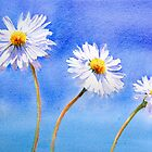 Daisy Daisy by Ruth S Harris