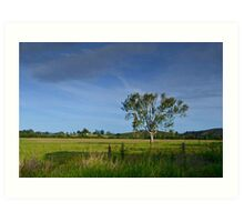 Mary Valley Country Art Print