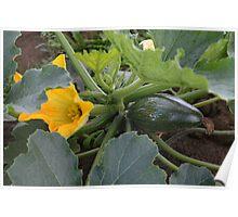 Little marrow type pumpkin and flower. Poster