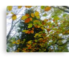 Autumn canopy! Canvas Print