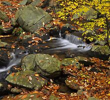 Autumn Stream - Smokey Mountains by Stephen Vecchiotti