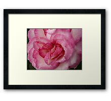 Rose Garden 11 Framed Print