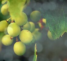 grapes by Angela Bruno