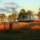 Hay Bales Revealed by Kelly Chiara