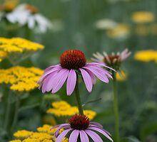 Purple Cone Flower by CapturedLIght