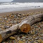 Driftwood by EarlCVans