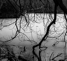Lake iced over by Gillian Cross