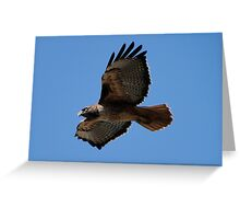 Western Red Tailed Hawk Greeting Card