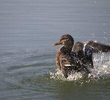 Splishin and a Splashin by NewfieKeith