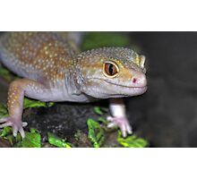 Our Gecko Photographic Print