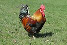 Colourful Cockerel by Barrie Woodward