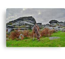 Dartmoor: Pony at Pew Tor Canvas Print