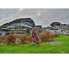 Dartmoor: Pony at Pew Tor Photographic Print