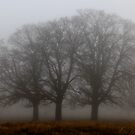 Trees in Mist by Martin Griffett