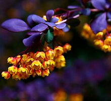 Purple and Yellow by Erika  Hastings
