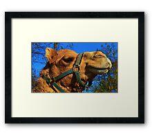 Camel Puss Framed Print