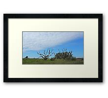 old trees on the prairie  Framed Print