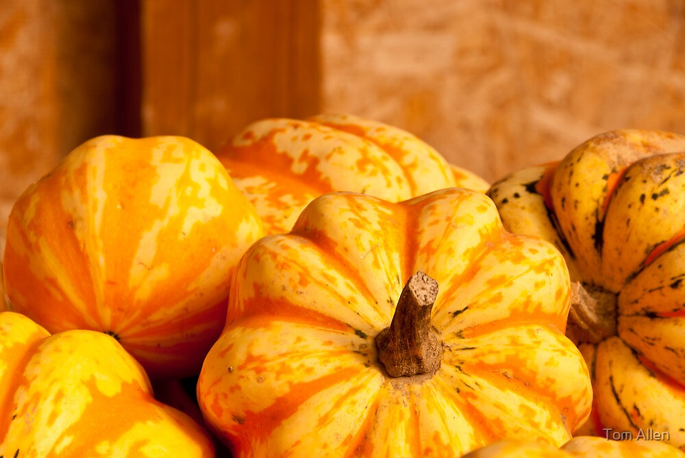Fall Harvest by Tom Allen