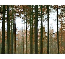 Forest Lines Photographic Print