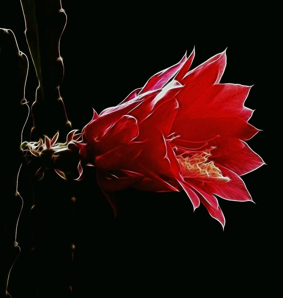 Wild Fractal Refractory Flower by Atılım GÜLŞEN