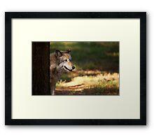 Behind the Tree Framed Print