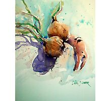 Onions and a crab claw Photographic Print