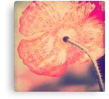 La Boheme Poppy Flower Canvas Print