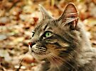 Cat Contemplation by Michelle Wrighton