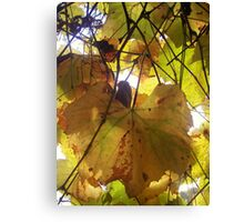 The coming of fall Canvas Print