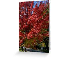 Bursting Red Maple Greeting Card
