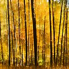 Autumn Forest by Greg Booher