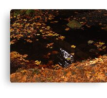 Leaves On A Woodland Pond Canvas Print