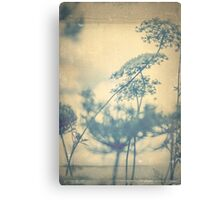 Chinoiserie Queen Anne's Lace Blue Canvas Print