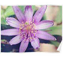 Gorgeous Lavender Star Poster