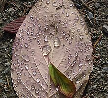 Raindrops On a Leaf by Jann Ashworth