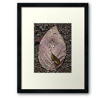 Raindrops On a Leaf Framed Print