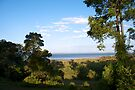 Moreton Bay through the trees by Renee Hubbard Fine Art Photography