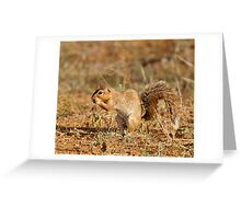 Unstriped Ground Squirrel Greeting Card