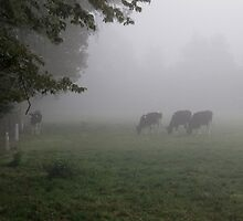 Cows in the Mist by John Vriesekolk