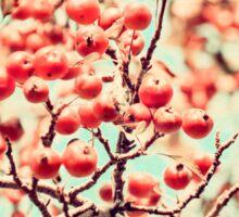 Botanical Malus, Crabapple Wild Apple Sticker