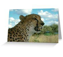 Cheetah - Namibia Greeting Card